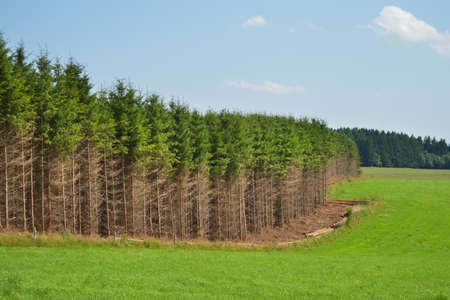 woody: Woody crops for biomass surrouded by meadows
