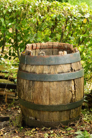 A weathered old wooden barrel in a garden Stock Photo - 26035322