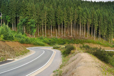 walloon: Pine trees and a winding road in a hilly Ardennes Landscape near Waimes in the Belgian East Cantons