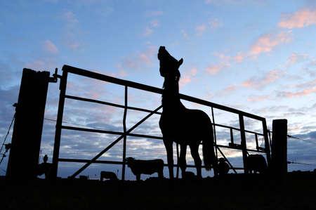 sundown: Horse and cattle behind a fence at sundown
