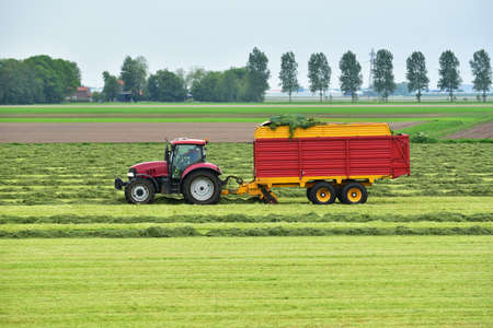 Tractor pulled a forage harvester harvests cutted hay silage into a silage wagon. Banque d'images