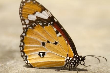 beine spreizen: Muster der Schmetterlinge.
