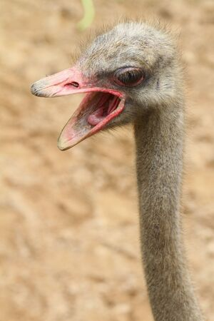 Features of way of the ostrich Stock Photo - 10635550