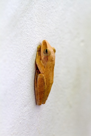 Frog caught on cement wall   photo