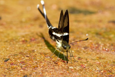 Papillon gros plan photo