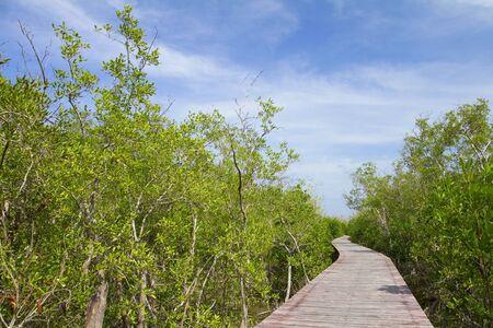 Boardwalk through the mangroves photo