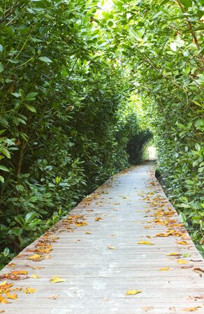 Mangrove Forest Broadwalk photo