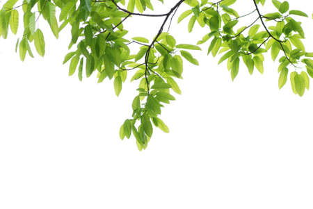 spring nature green leaf background Stock Photo - 6922012