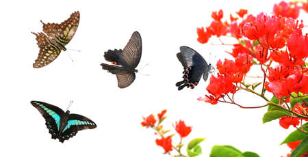 garden design: butterfly nature red flower background