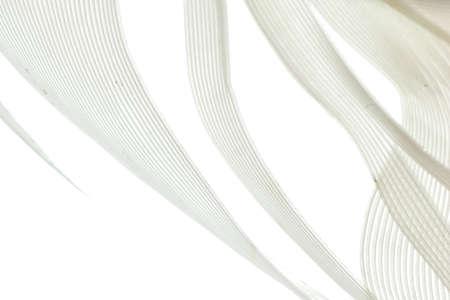 piuma bianca: uccello bianco piuma macro astratto sfondo