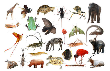 wild animal collection isolated in white Stock Photo - 7110890