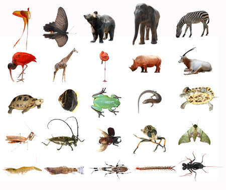 wild animal collection isolated in white photo