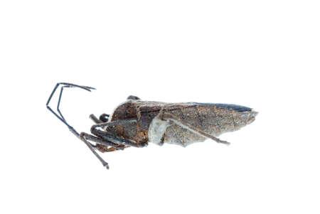 tufo: fallo de insectos f�tidas aislado en blanco