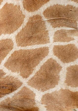 neutral background: giraffe fur pattern texture background