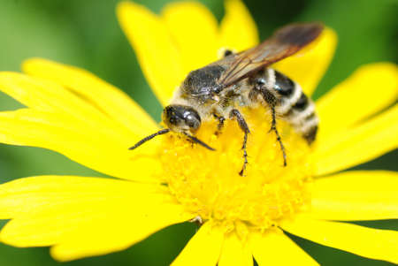 summer insect bee on flower photo