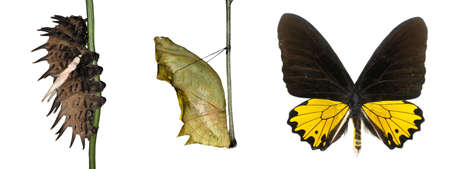 butterfly life cycle isolated photo