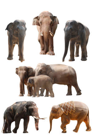 wild asia: elephant set collection isolated on white Stock Photo