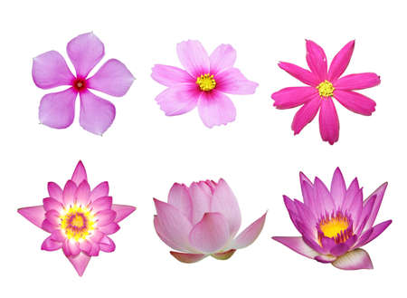pink flower collection isolated in white background