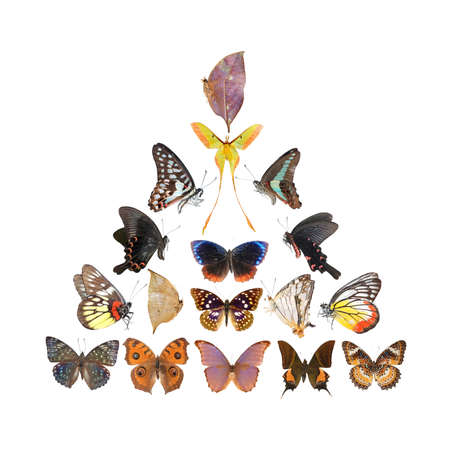 color butterfly: Butterfly pyramid collection isolated in white background