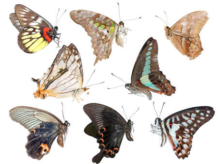 symmetry: butterfly collection side view isolated in white background.