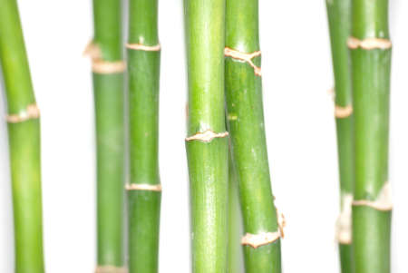 Bamboo background isolated in white photo