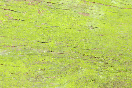 green moss on tree trunk surface texture background photo