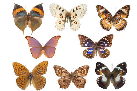 butterfly collection isolated on white Stock Photo - 7810684