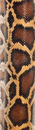 boa snake pattern background macro photo