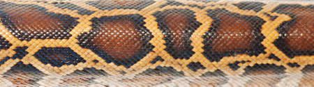 boa snake pattern background macro photo