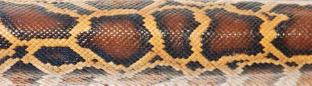 snakeskin: boa snake pattern background macro