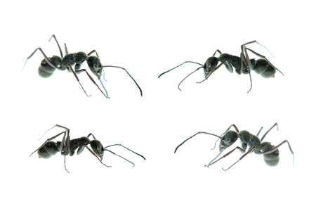 ant side view set isolated on white Stock Photo - 7922121