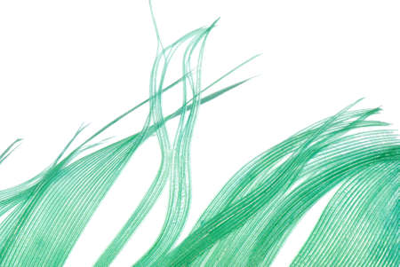 green feather abstract texture background isolated on white Stock Photo - 7922331