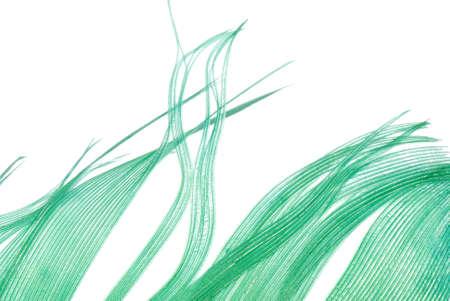 piuma bianca: piuma verde trama astratto sfondo isolato on white  Archivio Fotografico