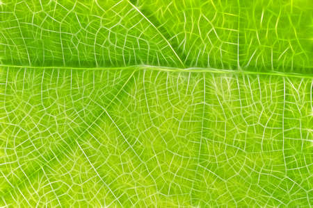 green leaf macro abstract texture background Stock Photo - 7923078