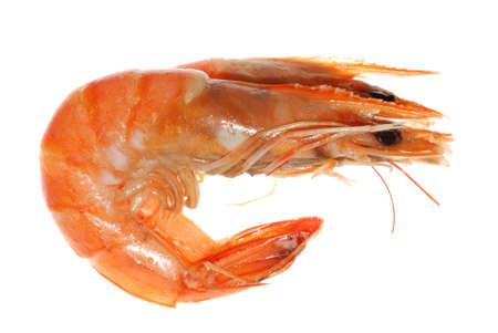 prepared shrimp: Delicious boiled shrimp isolated in white