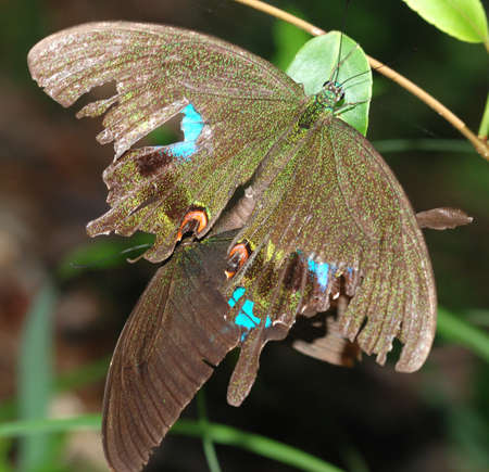 butterfly sex mate in nature Stock Photo - 7987496
