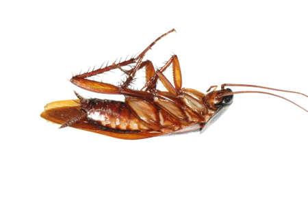 insect dode cockroach bug geïsoleerd op wit