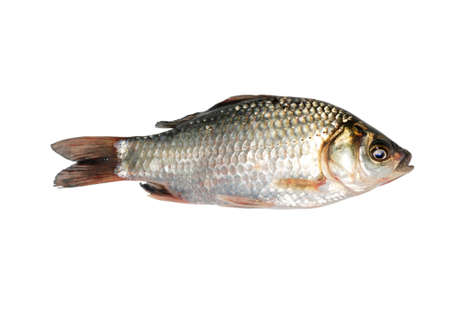 small plate: carp fish isolated on white background Stock Photo