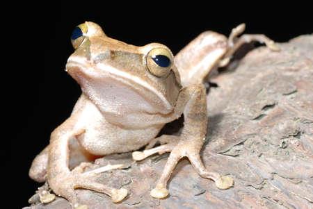 animal tree frog on branch photo