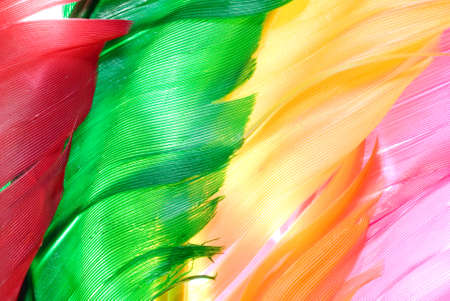 waft: colourful bird feather  texture background