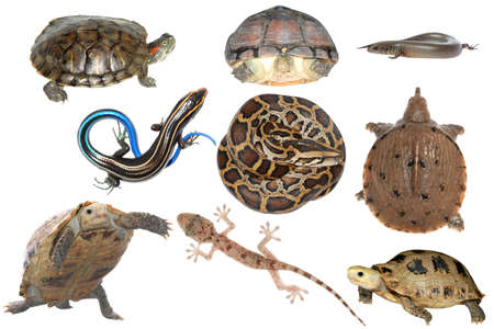 wild animal collection reptile snake lizard turtle and tortoise photo