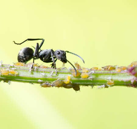 insect ant macro photo