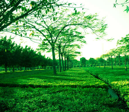 green tree and grass in park photo