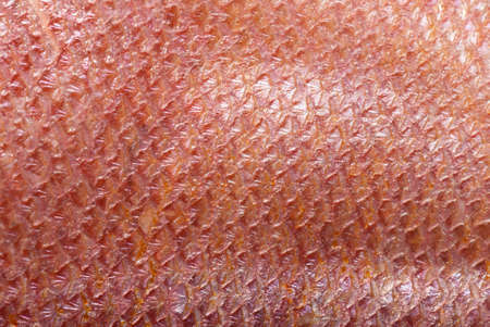 animal scale: fish scale macro detail background Stock Photo