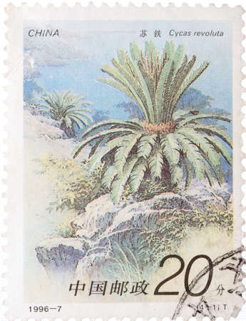 cycas: China - CIRCA 1996: A stamp printed in China shows cycad tree Cycas revoluta , circa 1996 Stock Photo