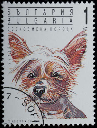 BULGARIA - CIRCA 1991: A stamp printed in BULGARIA shows animal pet dog portrait, circa 1991 photo