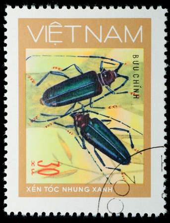 long horn beetle: VIETNAM - CIRCA 1980s: A stamp printed in Vietnam shows animal insect long horn beetle bug, circa 1980s Stock Photo