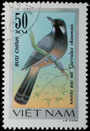 VIETNAM - CIRCA 1978: A stamp printed in Vietnam shows animal songbird, circa 1978 photo