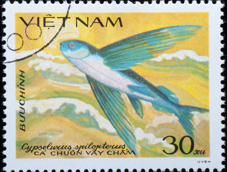 VIETNAM - CIRCA 1984: A stamp printed in Vietnam shows animal fish , circa 1984 Stock Photo - 9242912
