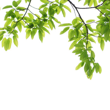 green leaf background Stock Photo - 9480040